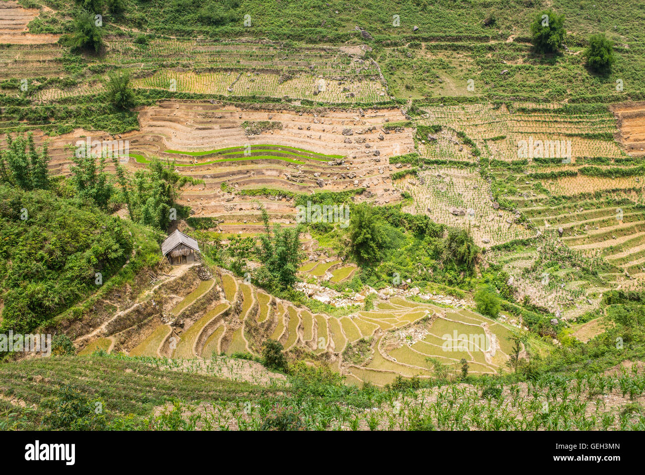 Small wooden hut and traditional rice paddies in Sapa, North Vietnam. - Stock Image