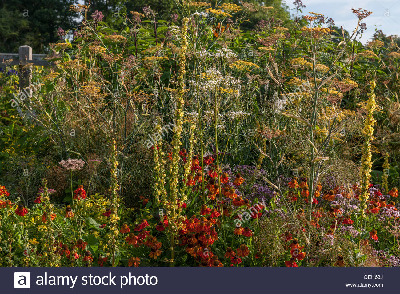 perennial plant combination - Stock Image