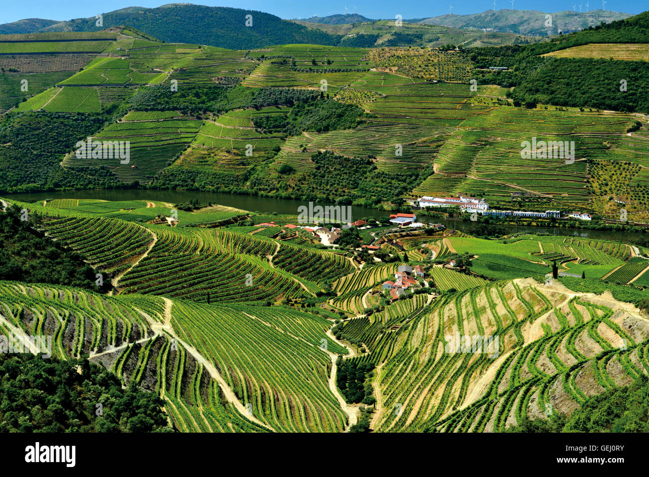 Portugal: Green wine yards and terraces of the Douro Valley - Stock Image