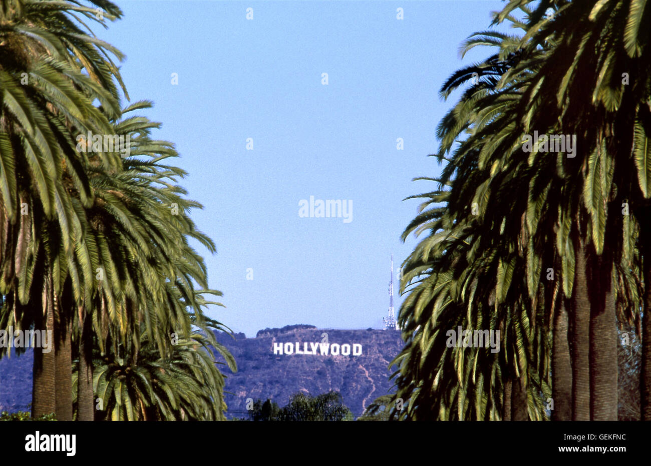 The Iconic Hollywood Sign Viewed Thorough Palm Tree Lined Street