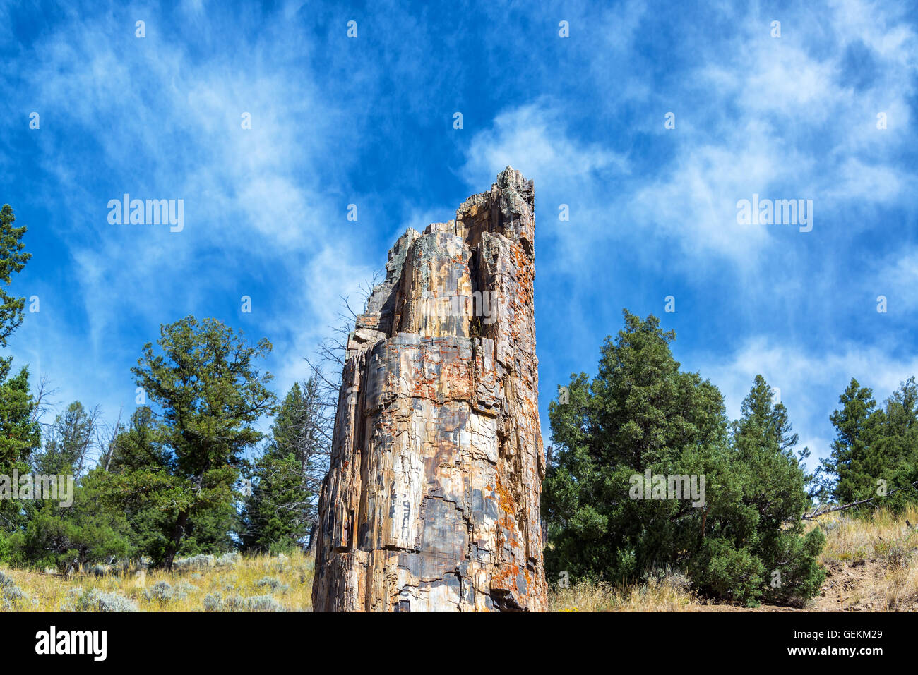 View of the famous petrified tree in Yellowstone National Park - Stock Image