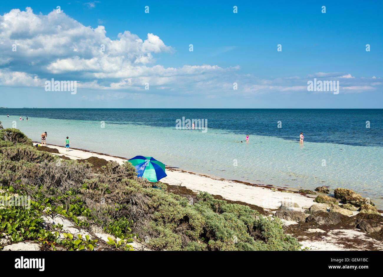 Florida, Bahia Honda State Park, Seagrass on beach - Stock Image