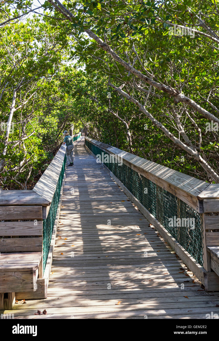 Florida Keys, Long Key State Park, Golden Orb Nature Trail, boardwalk through mangrove forest - Stock Image