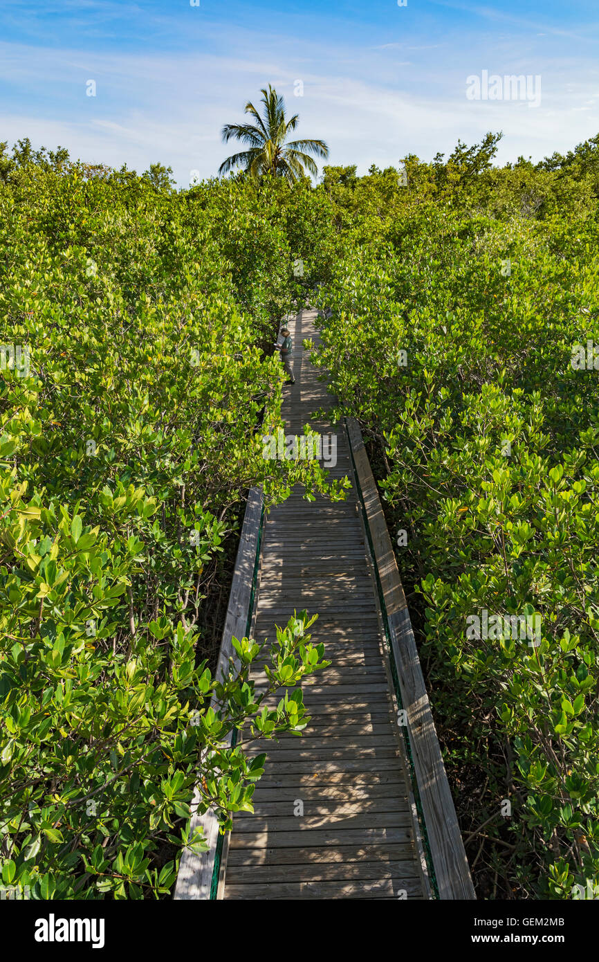 Florida Keys, Long Key State Park, Golden Orb Nature Trail, boardwalk through mangrove forest, view from observation - Stock Image