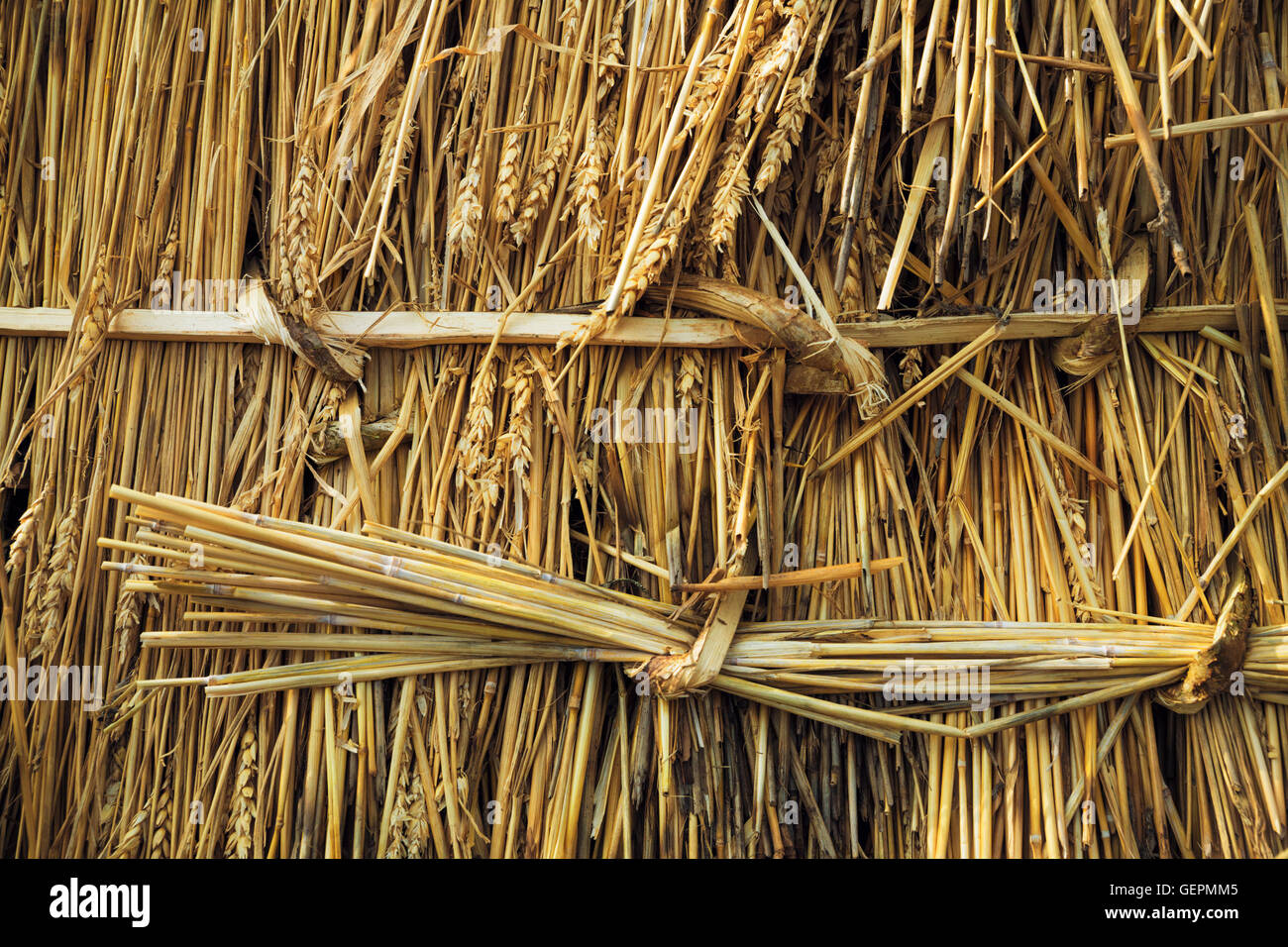 Close up of straw laid on a roof, and pegged into place with wood pegs and twisted reed. - Stock Image
