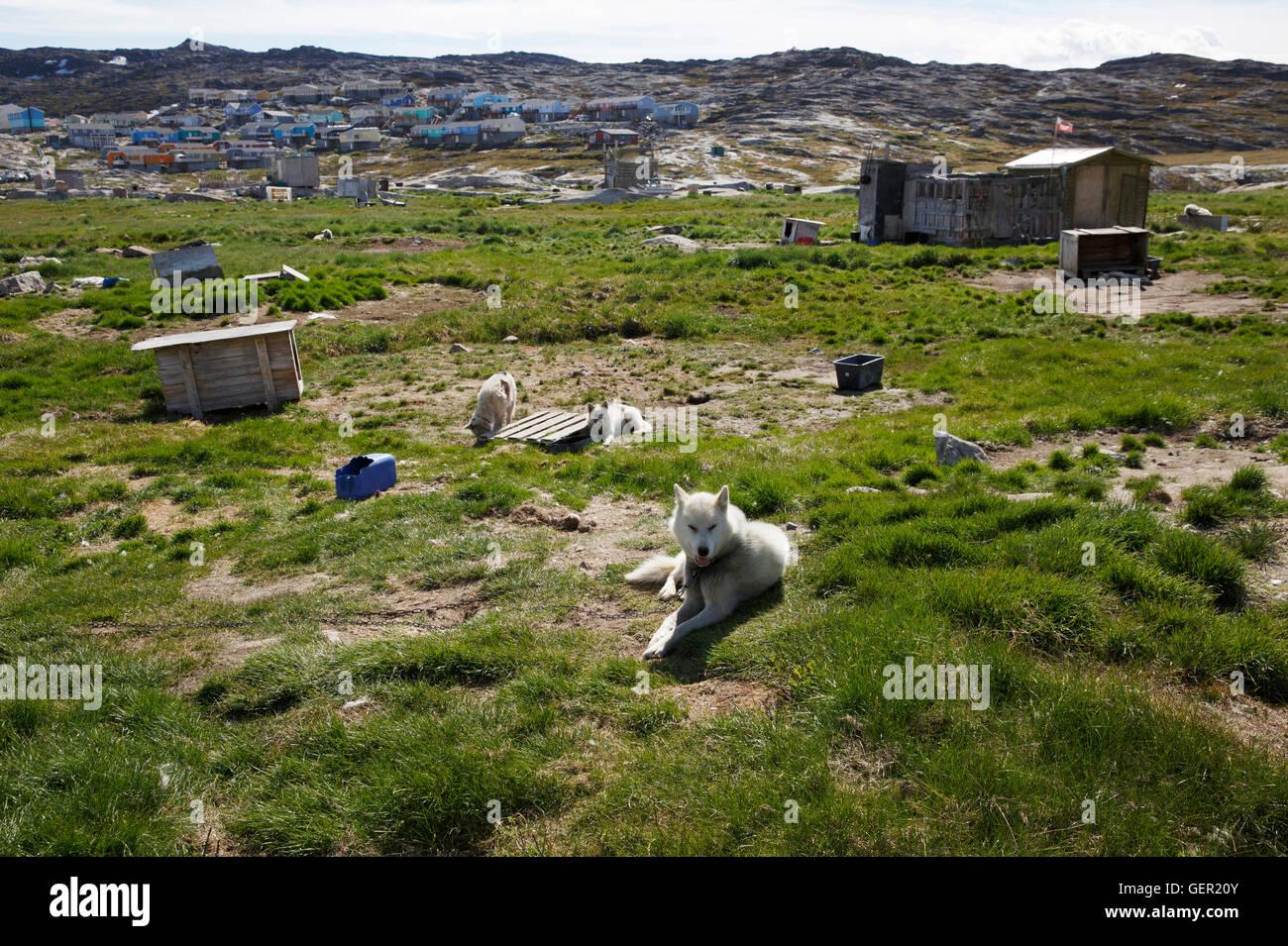 Sledge dog compound on the outskirts of Ilulissat, Greenland - Stock Image