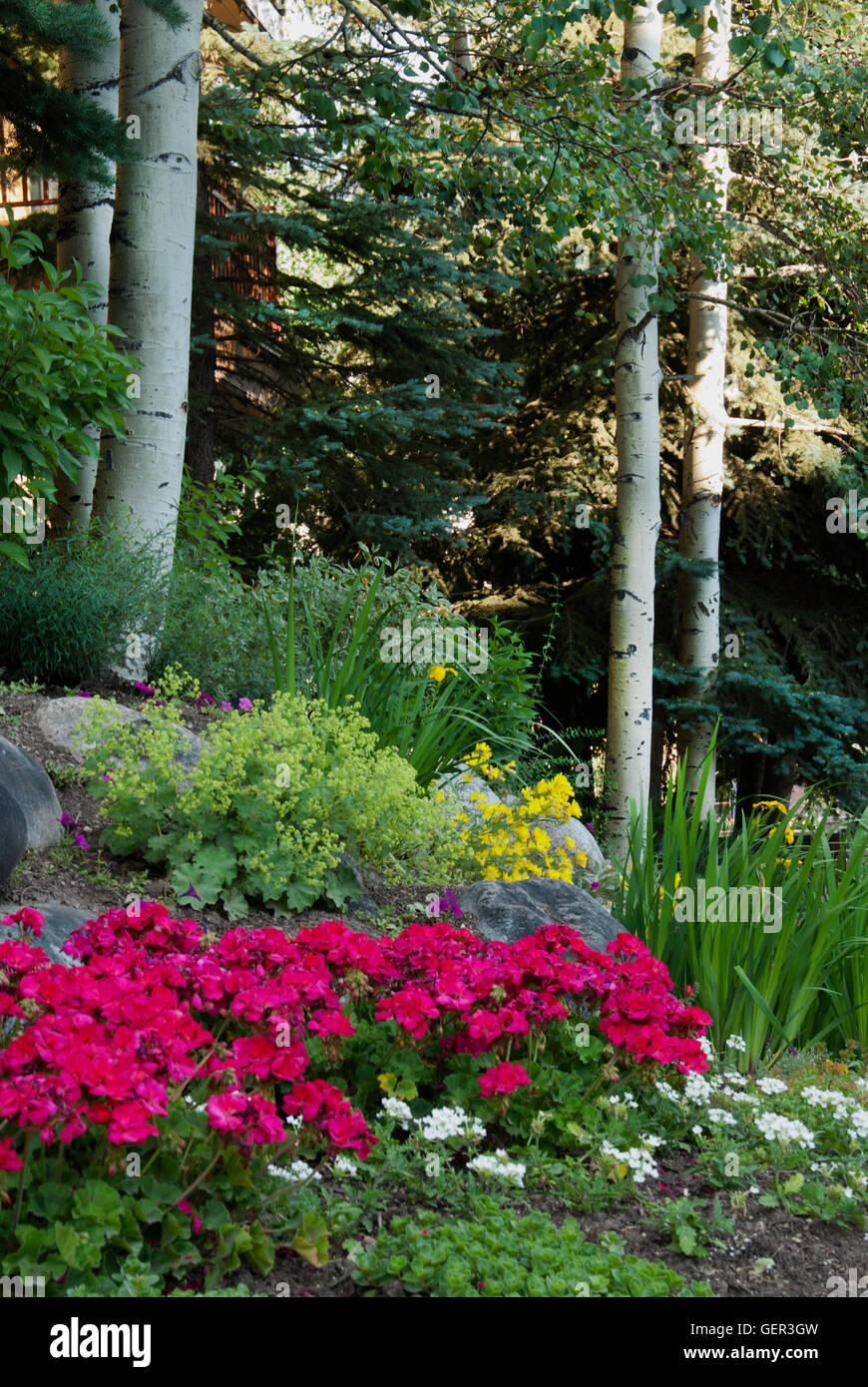 Vail Colorado Garden With Alchemilla And Geranium Stock Photo