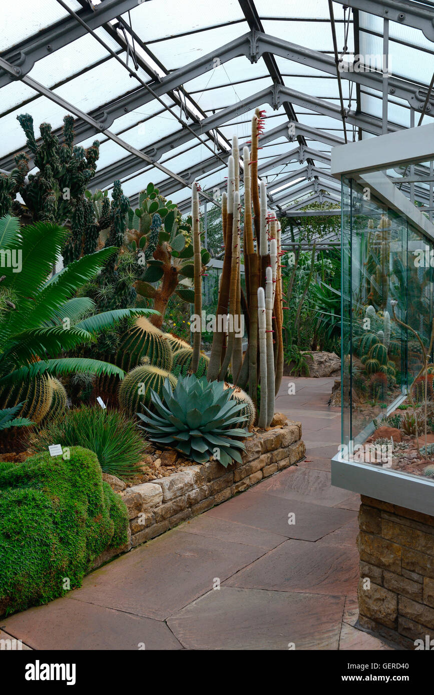 kakteenhaus in der wilhelma zoologisch botanischer garten. Black Bedroom Furniture Sets. Home Design Ideas