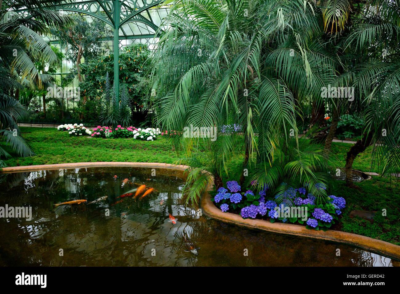 palmenhaus wilhelma zoologisch botanischer garten. Black Bedroom Furniture Sets. Home Design Ideas