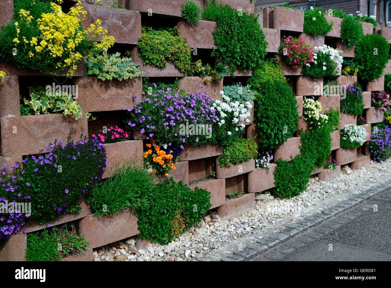 Mauer mit bluehenden Blumen, Mauerwerk mit Aussparungen fuer Blumen Stock Photo