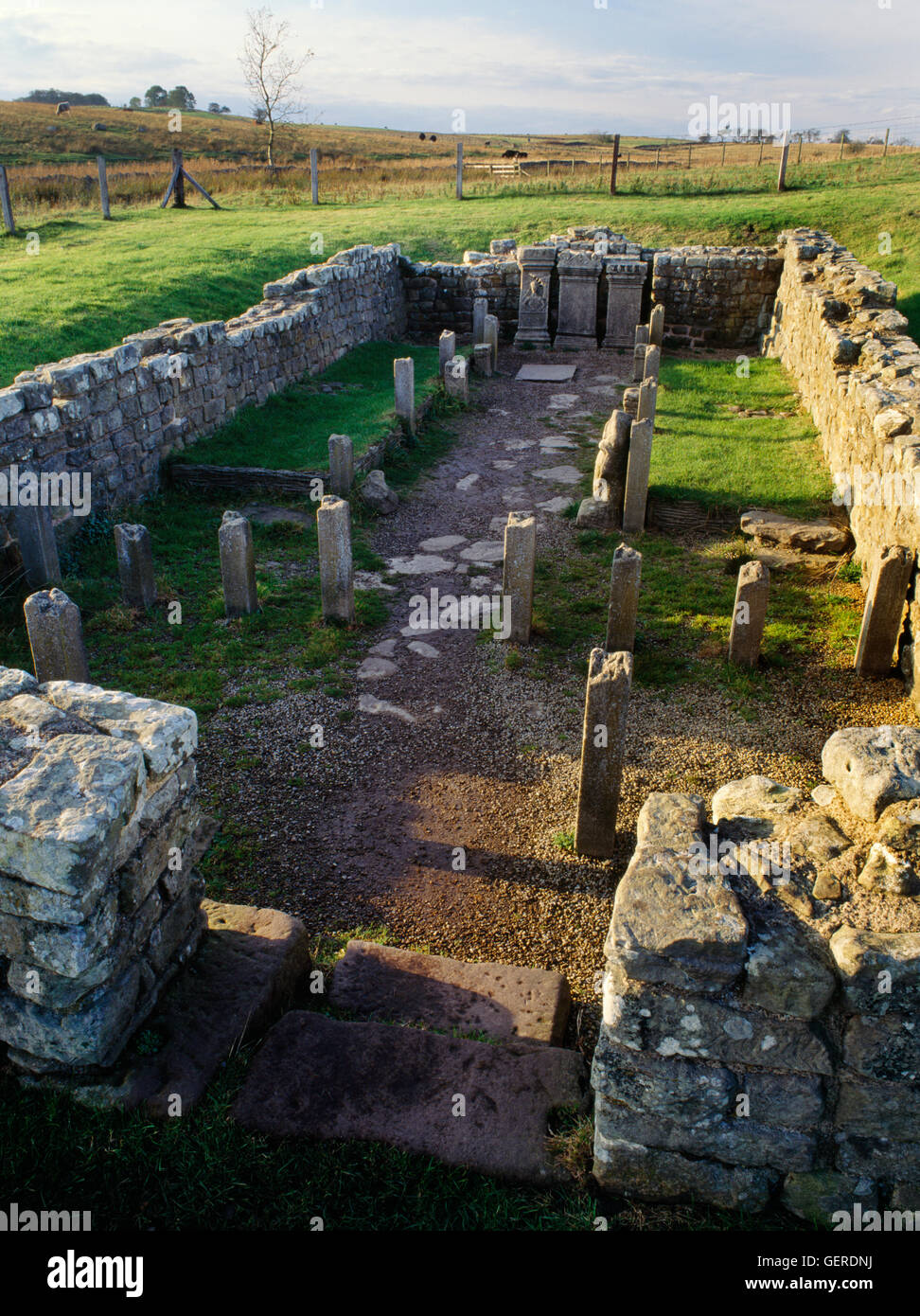 C3rdAD Temple of Mithras (Mithraeum) beside Carrawburgh Roman fort on Hadrian's Wall, Northumberland. Looking - Stock Image