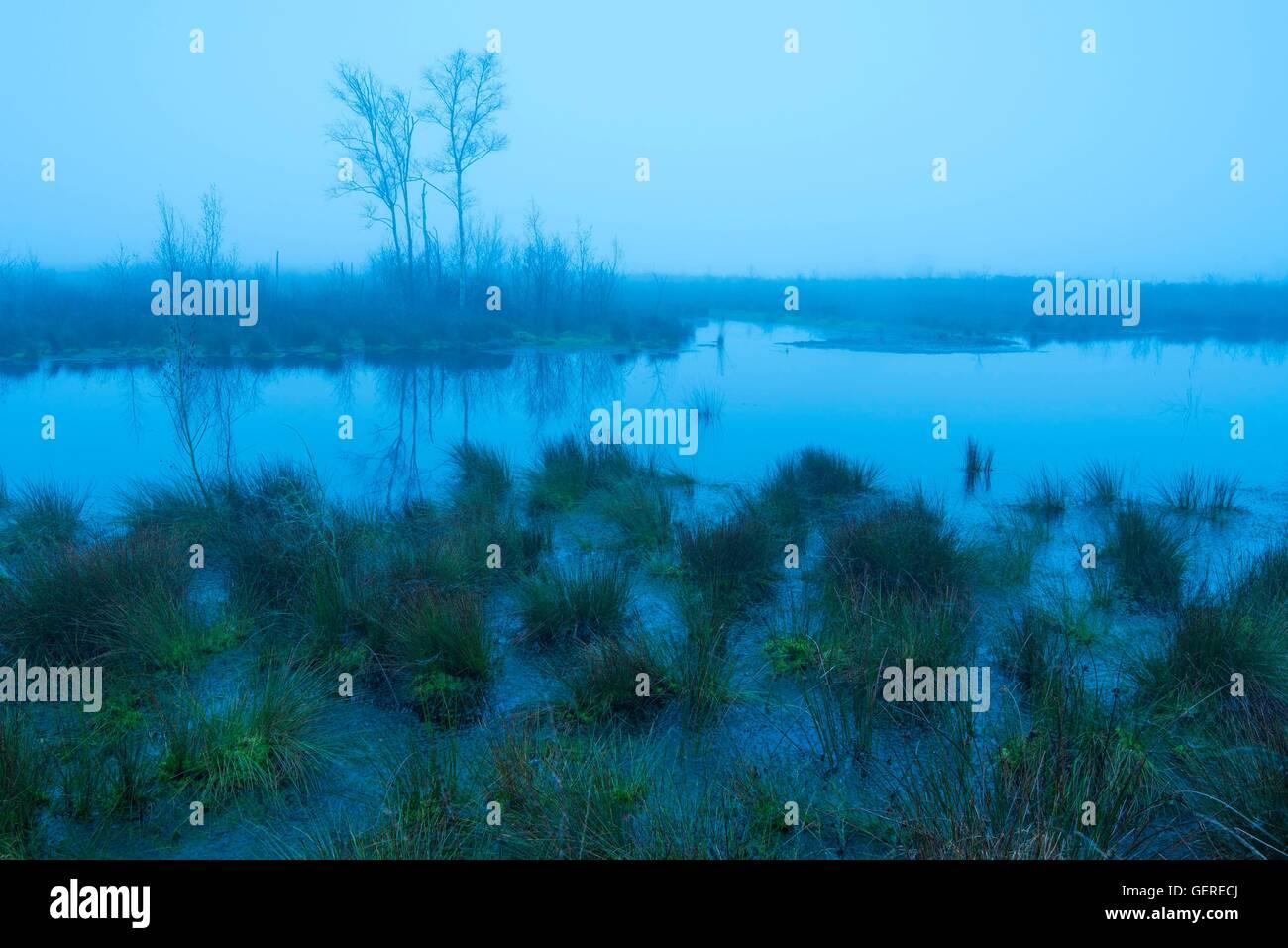 Moor zur blauen Stunde, Goldenstedter Moor, Niedersachsen, Deutschland - Stock Image