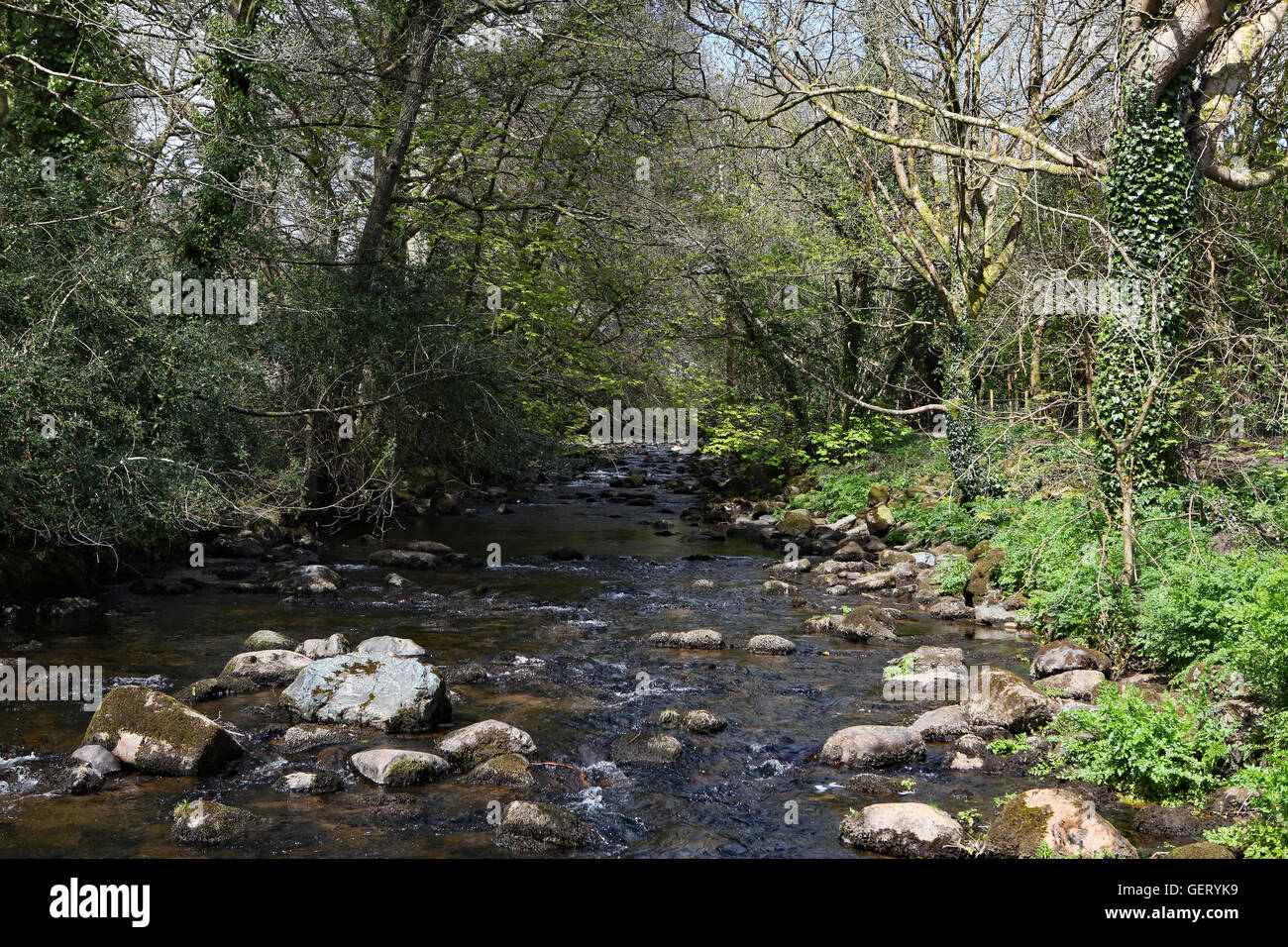 River Avon - Stock Image