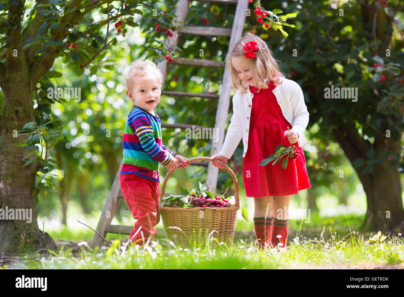 Kids picking cherry on fruit farm. Children pick cherries in summer ... for Fruit Farm Photography  61obs