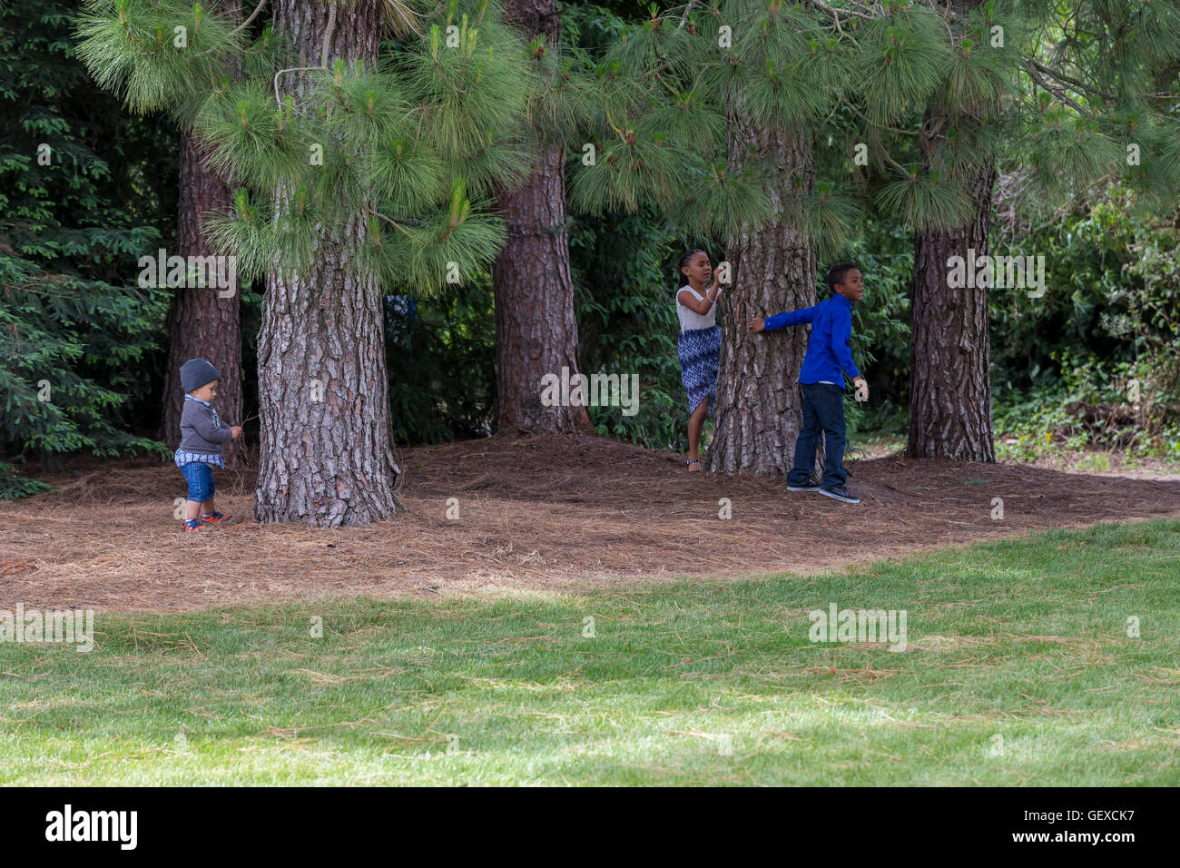 boys and girl, playing, playing, hide-and-seek, Sonoma State University, city, Rohnert Park, Sonoma County, California - Stock Image