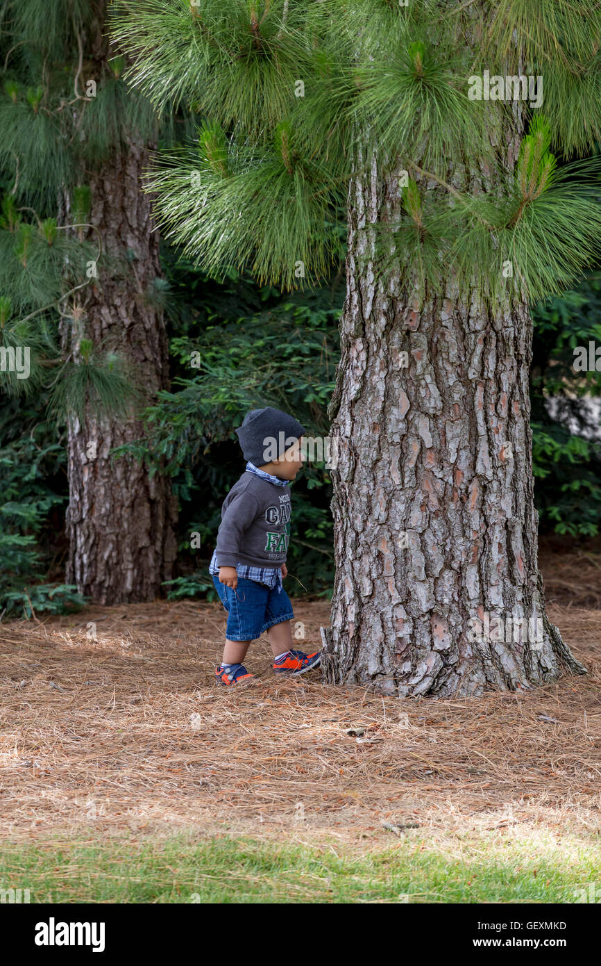 young boy, playing, hide-and-seek, Sonoma State University, city, Rohnert Park, Sonoma County, California - Stock Image