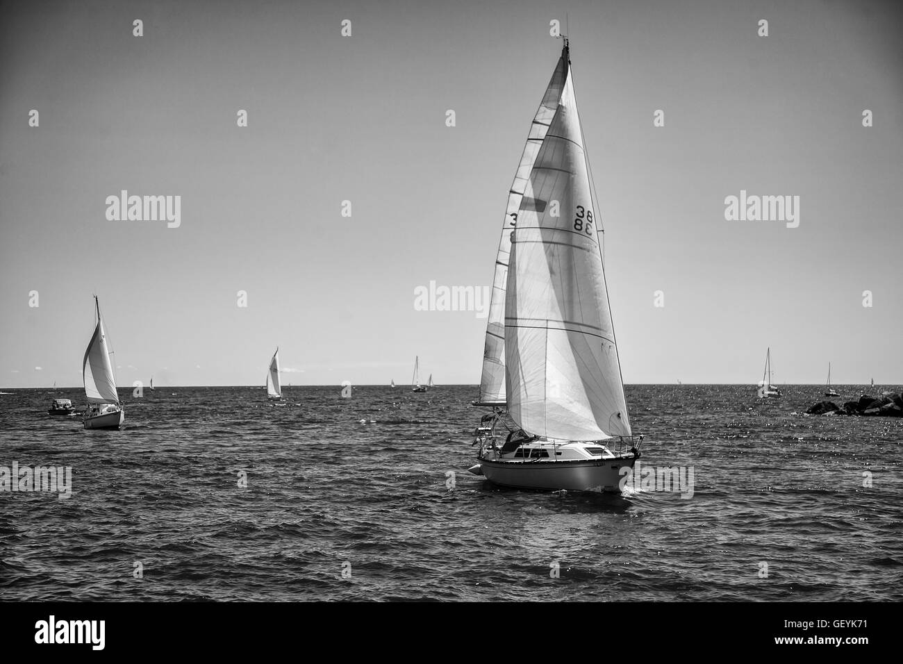 Black and White - Sail Boats - Stock Image
