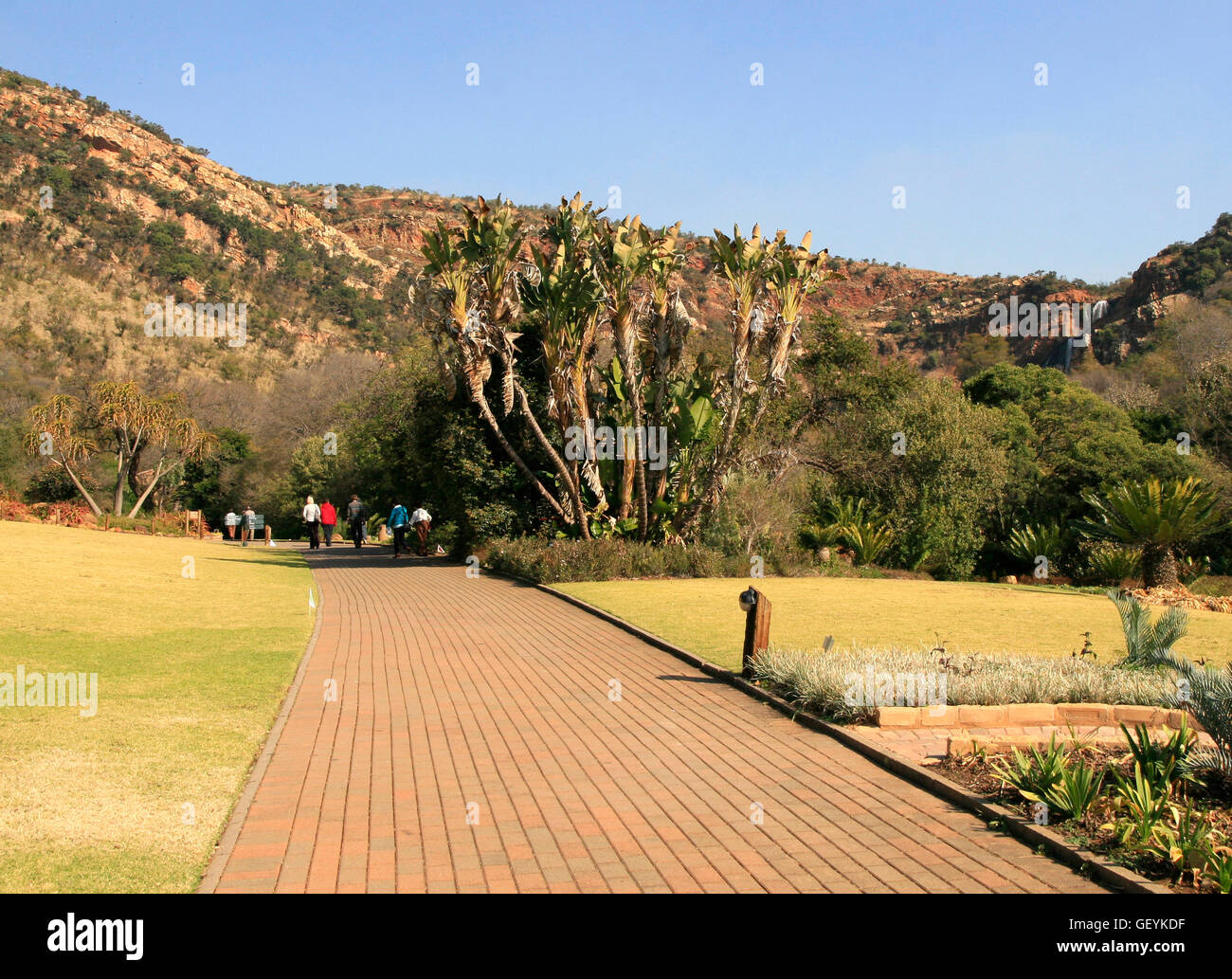 Path with trees and mountains, Walter Sisulu National Botanical ...
