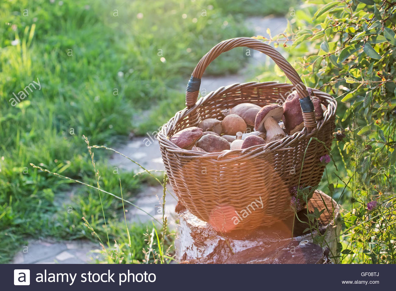 full basket with mushrooms standing on the stub - Stock Image