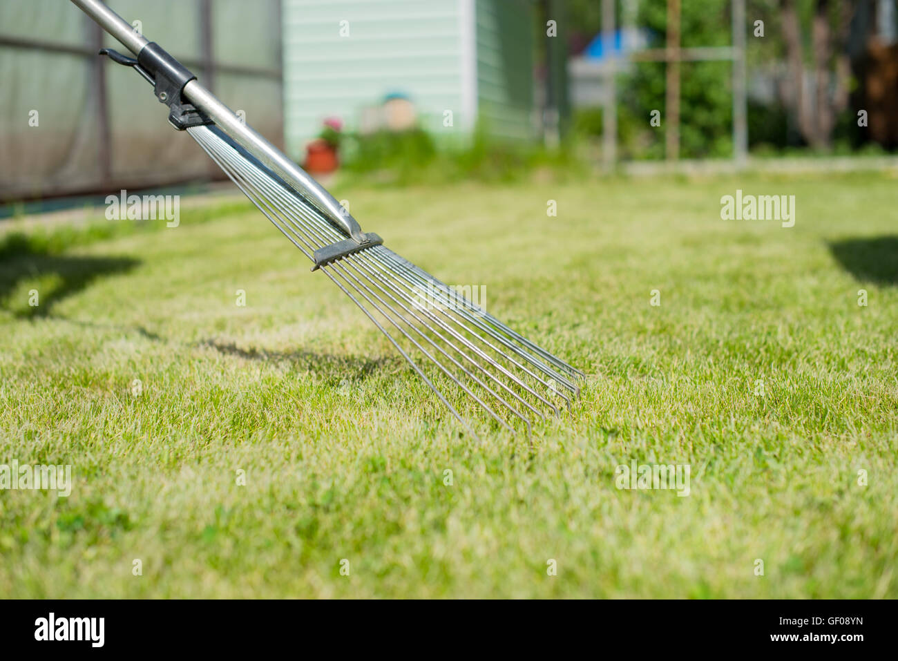 On the green lawn rake collect grass clippings - Stock Image