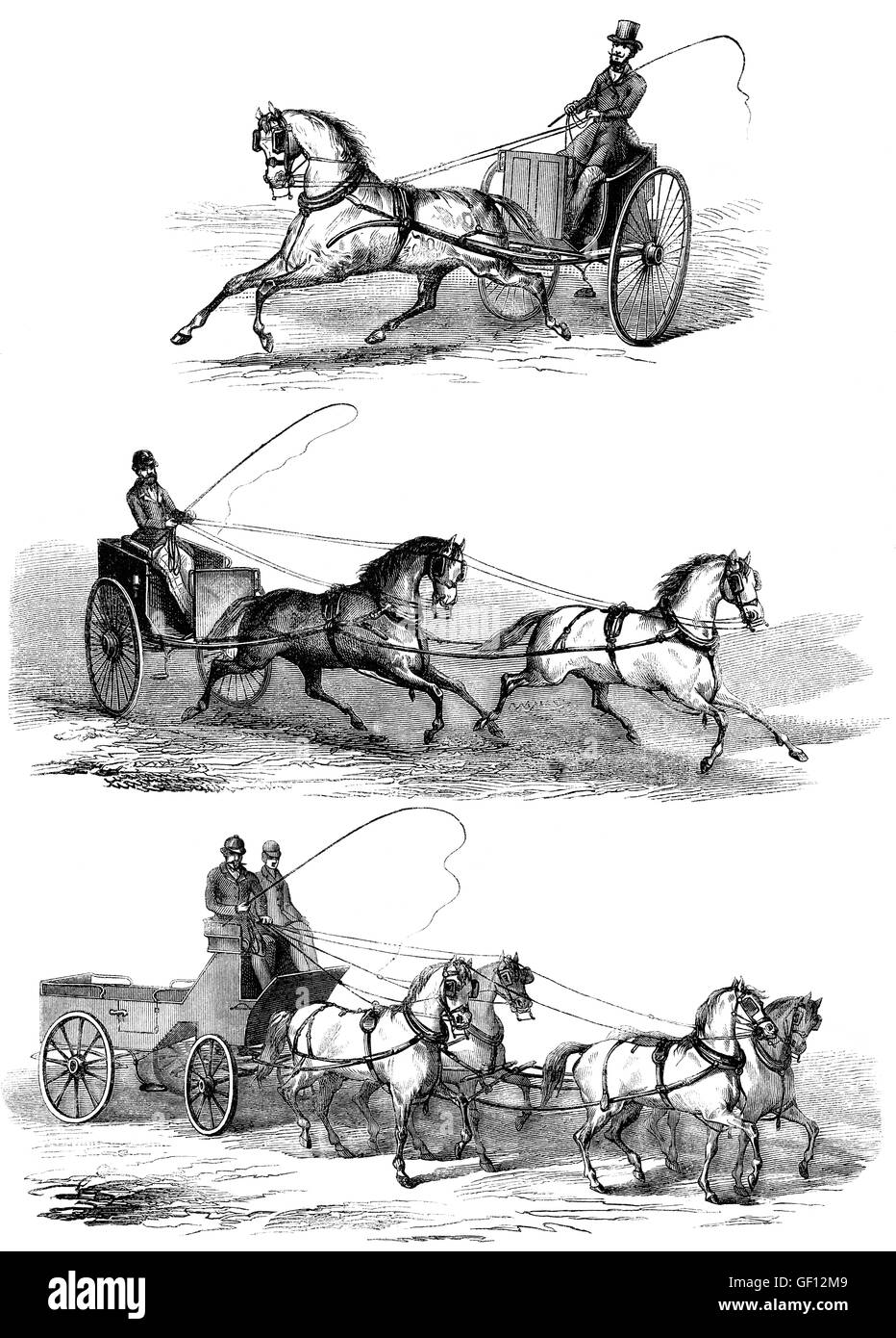 Methods of guiding horses by pulling on its reins - Stock Image
