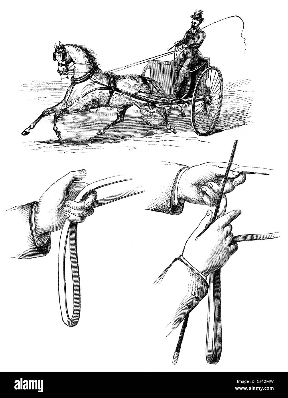 Methods of guiding horses by pulling on its reins, one horse driving - Stock Image