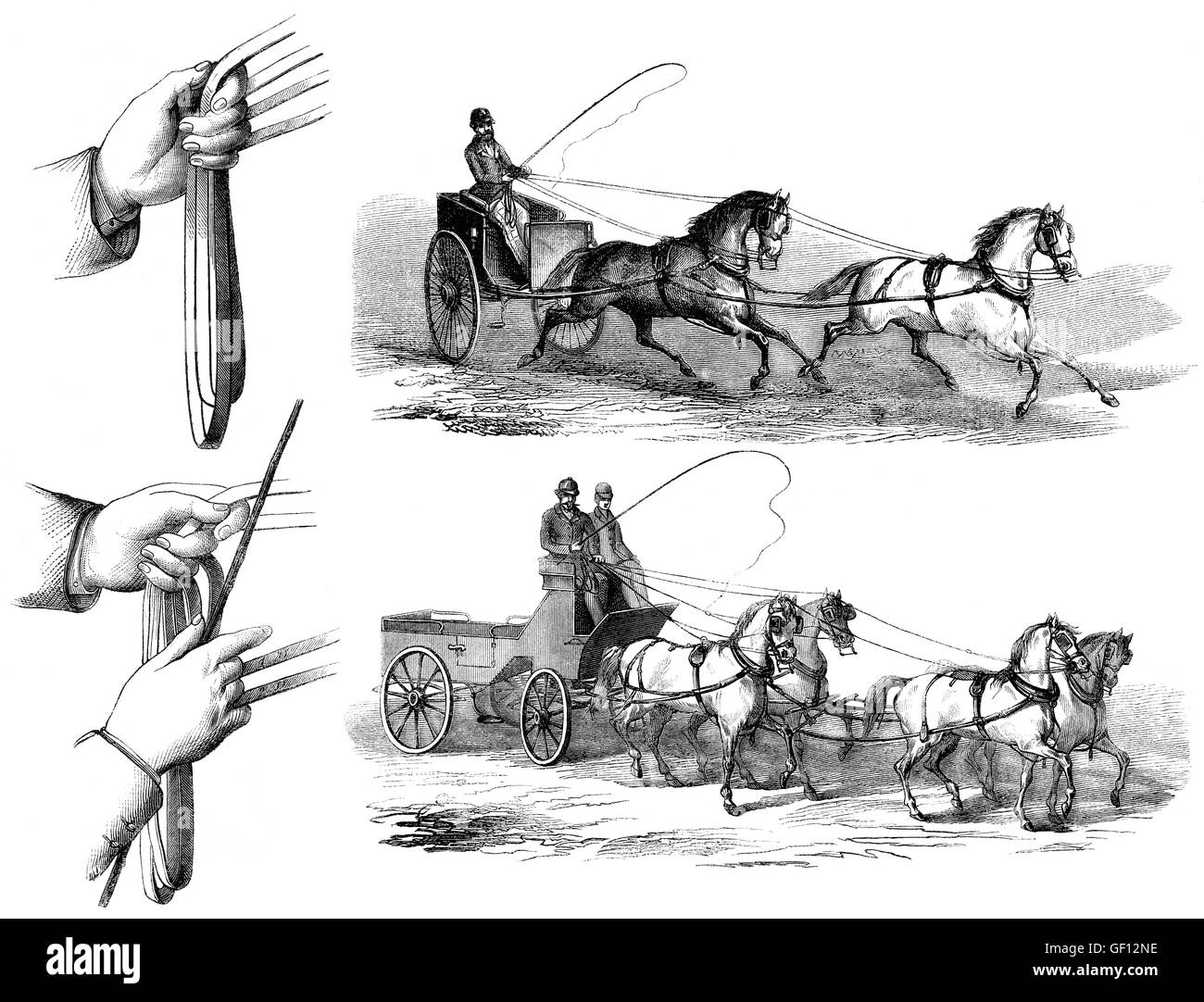 Methods of guiding horses by pulling on its reins, two or four horses driving - Stock Image