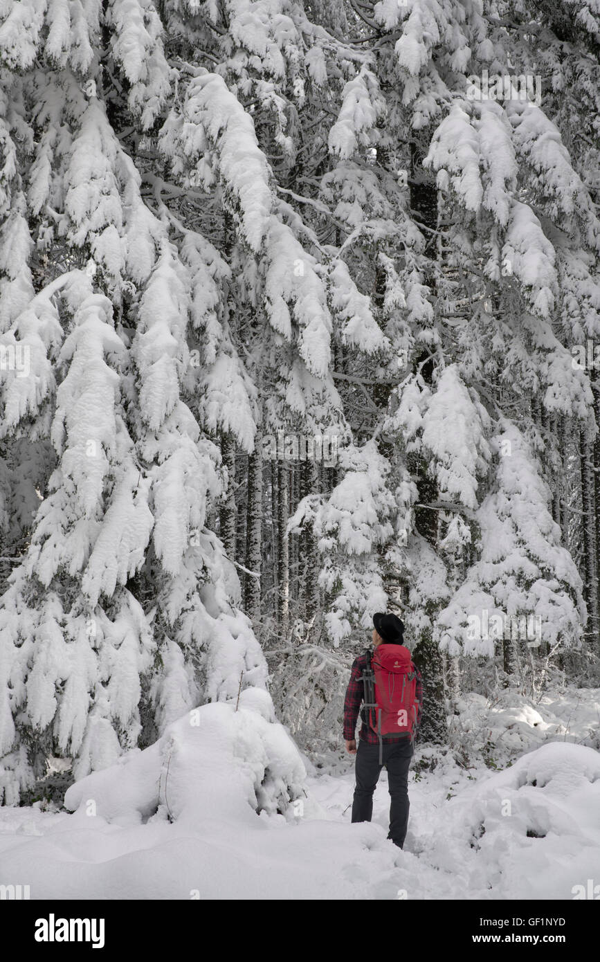 Hiker with backpack in snow covered woods. Oregon Cascades - Stock Image