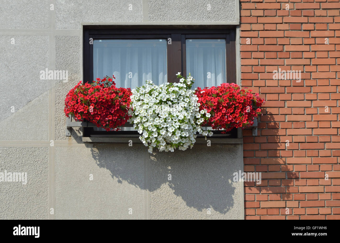 Window with pots of lush red and white flowers in a summer day Stock Photo