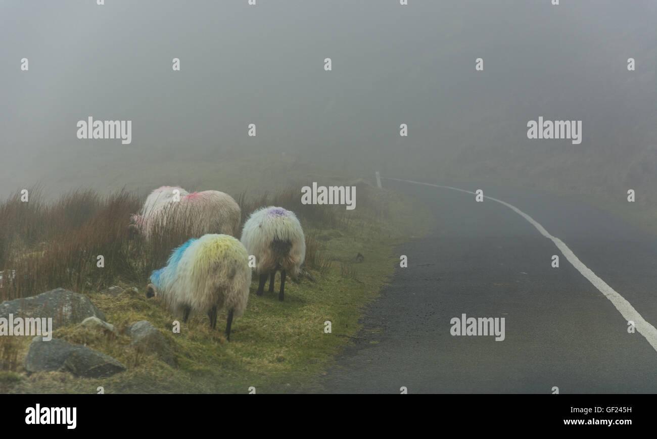 Achill island, Ireland, County Mayo - Stock Image