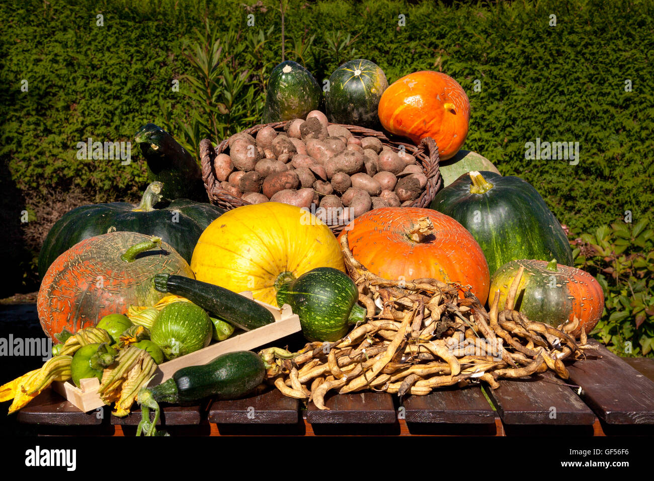 Harvested vegetables presented on a table in autumn for the thanksgiving festival - Stock Image