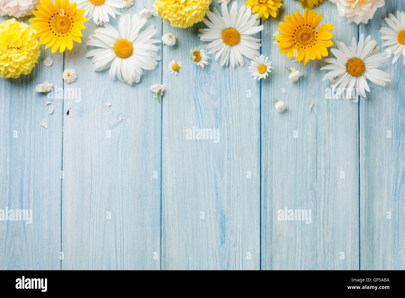 Garden flowers over blue wooden table background. Backdrop with copy space - Stock Image