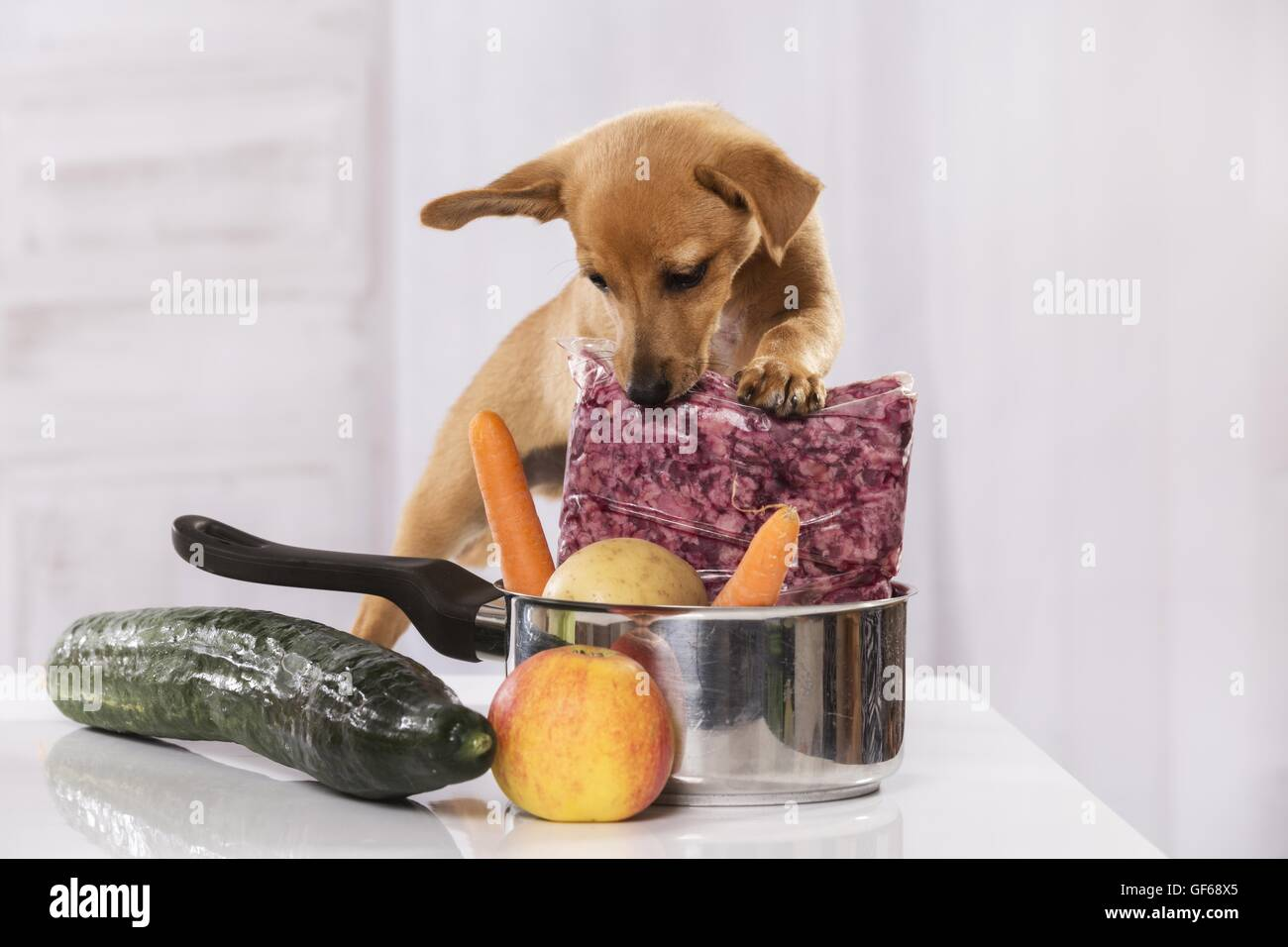 Puppy with food - Stock Image