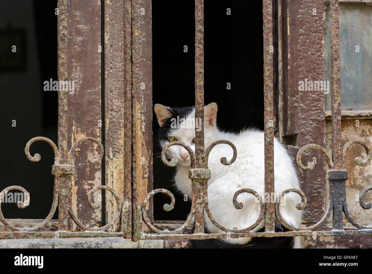 Peering Through Window Stock Photos Amp Peering Through