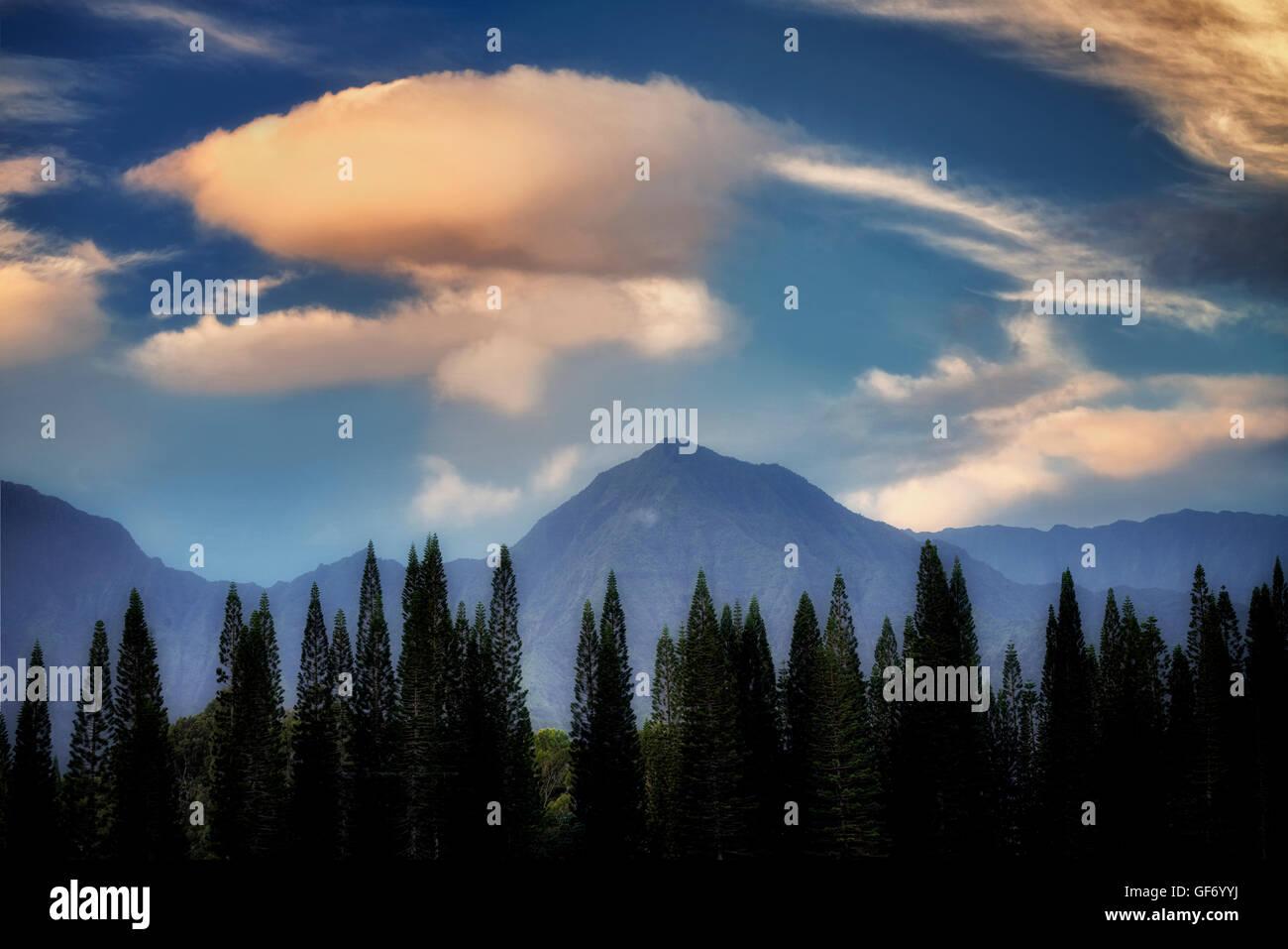 Norfolk Island Pines and mountains with sunrise. Kauai, Hawaii - Stock Image