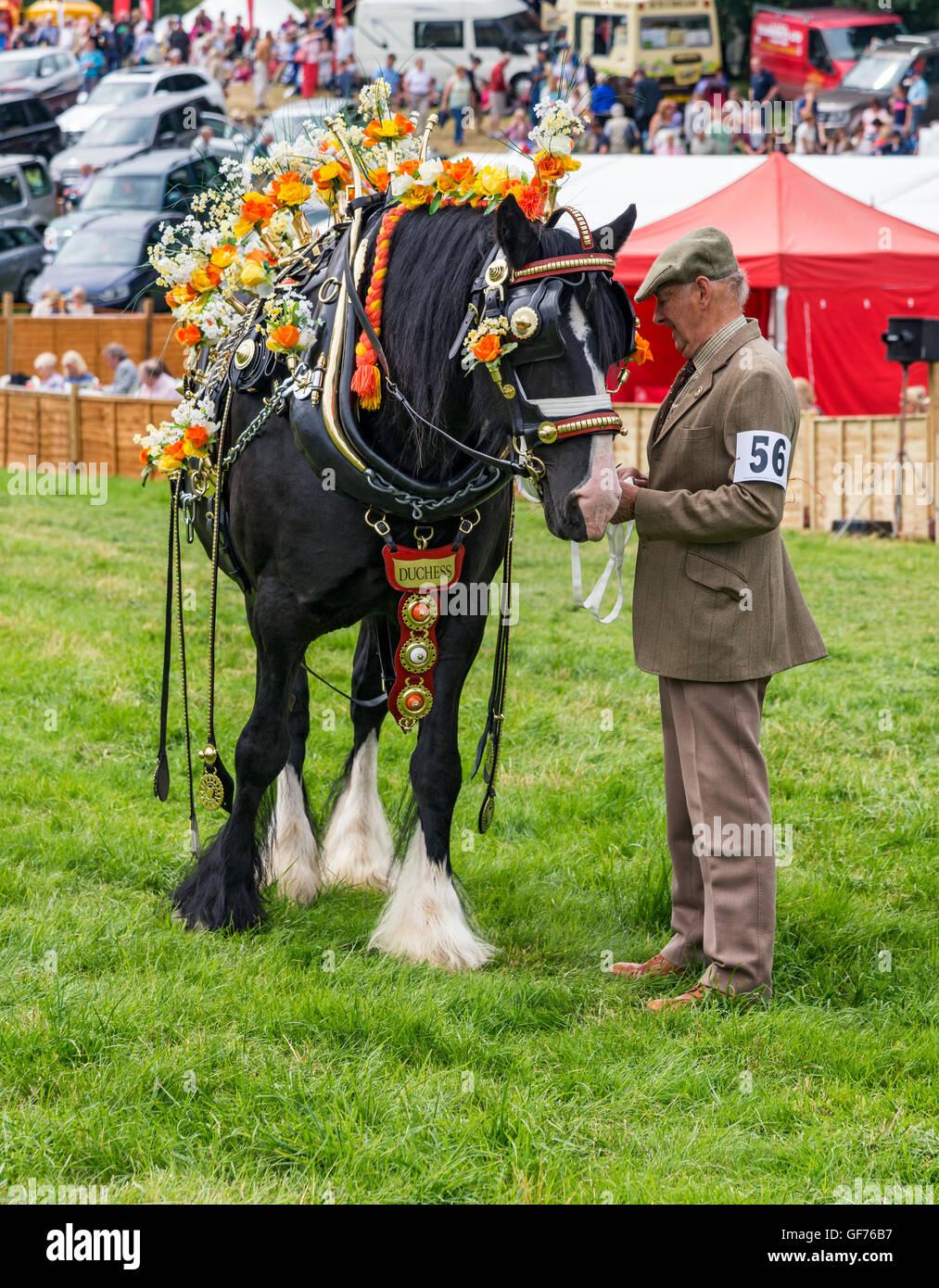 Decorated heavy horses at Ryedale show - Stock Image