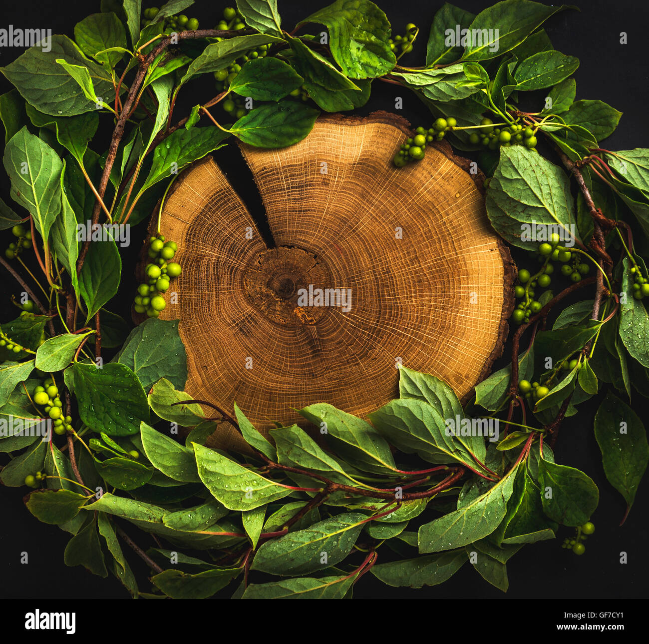 Background with Schisandra chinensis wreath around wooden board on dark, copy space - Stock Image