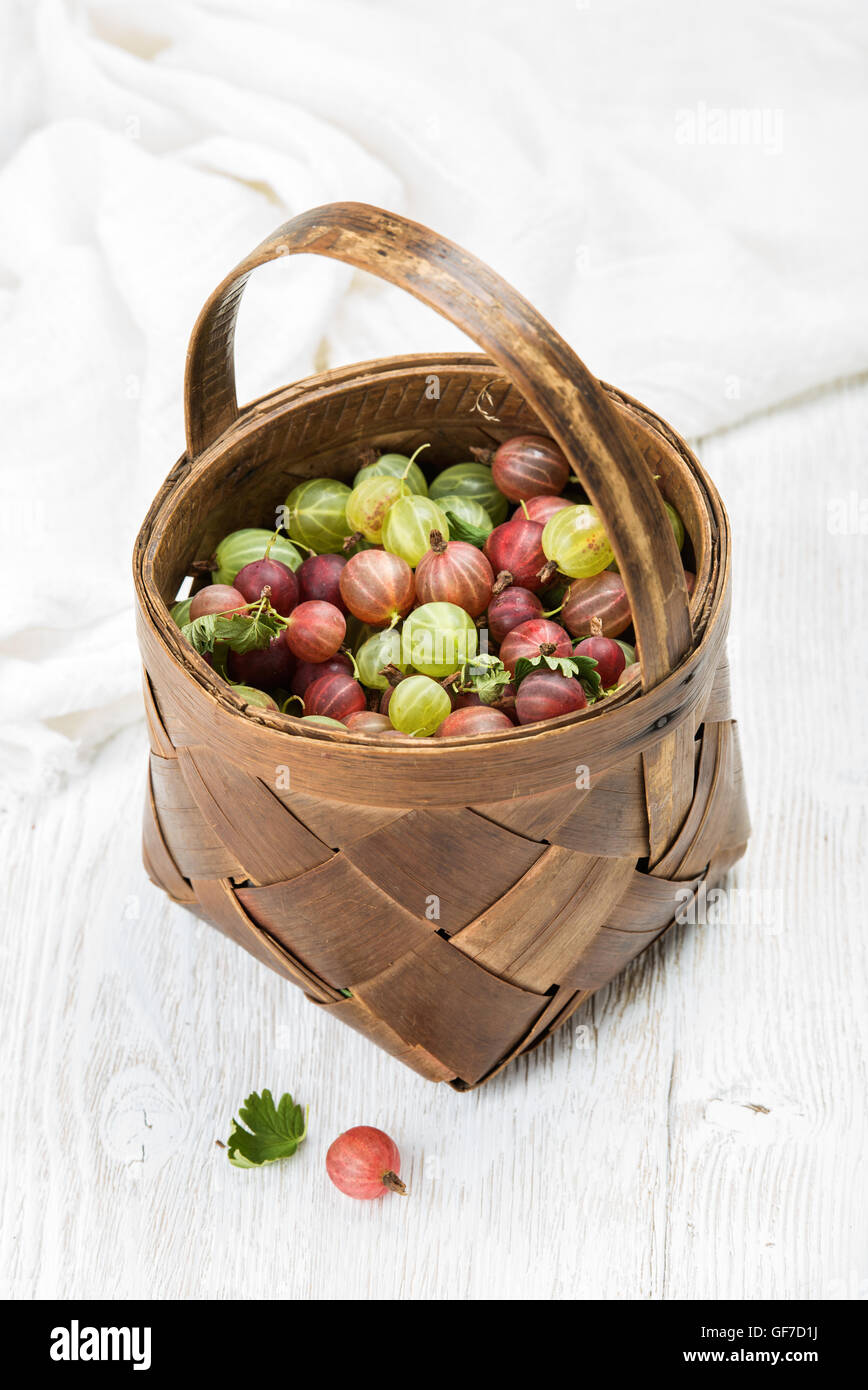 Birchbark basket full of ripe green and red gooseberries - Stock Image