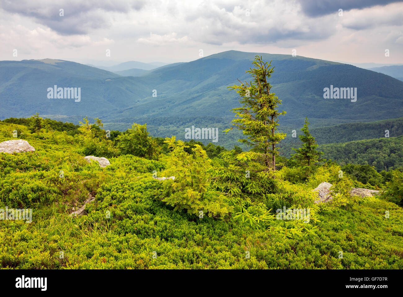 lonely conifer tree and stone on the edge of hillside with path in the grass on top of high mountain range Stock Photo