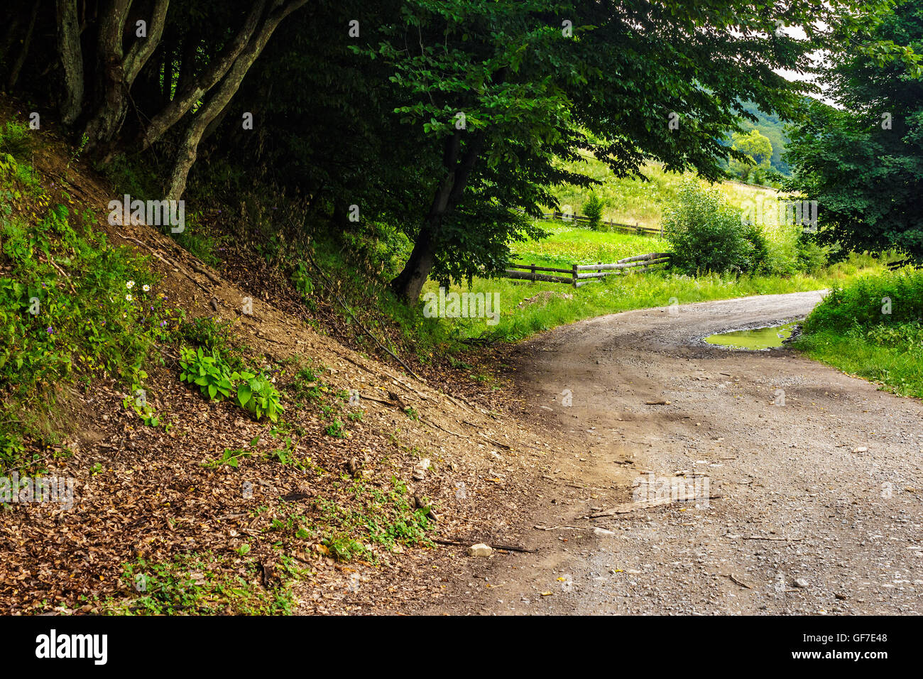 rural road through the forest to agricultural meadow eith wooden fence - Stock Image
