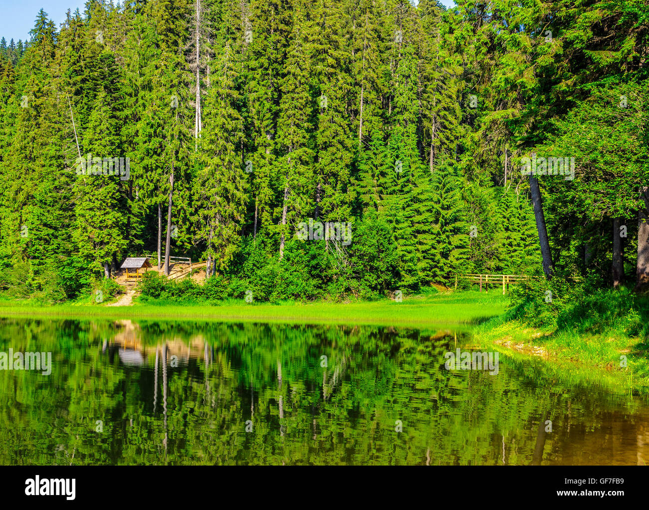 landscape near the lake among conifer forest  in the early summer morning - Stock Image