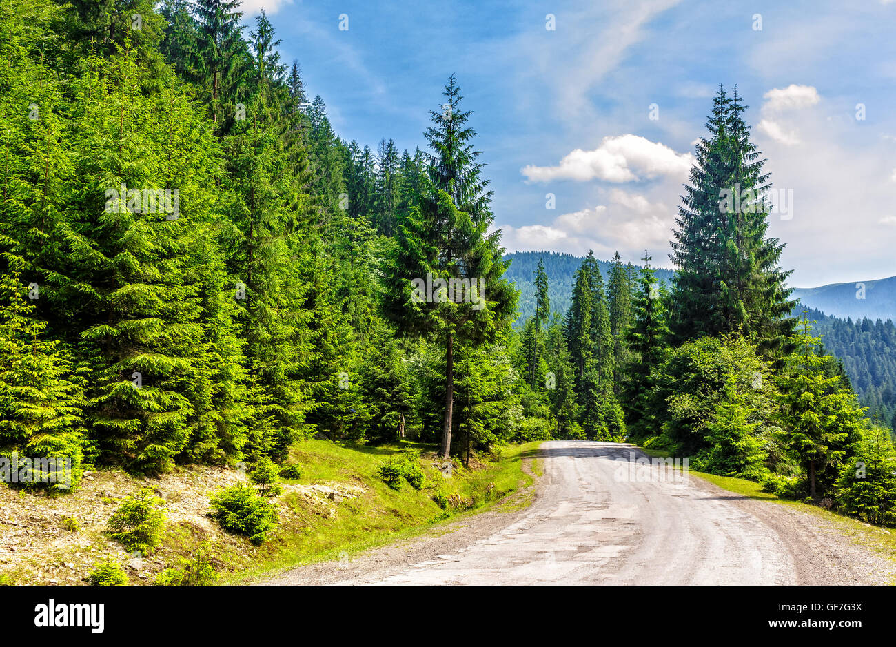 old cracked asphalt road going in mountains and passes through the green conifer forest - Stock Image