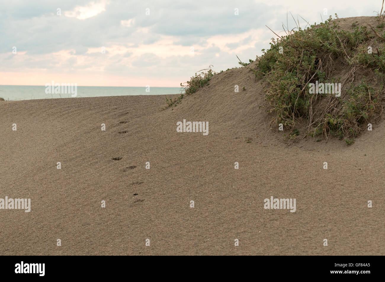 footprints on sand dunes - Stock Image