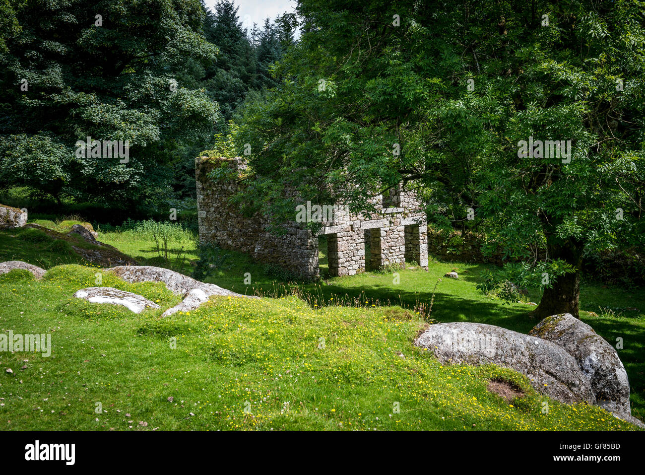 Deserted Medieval farm house near Burrator Reservoir on Dartmoor, Devon, UK - Stock Image