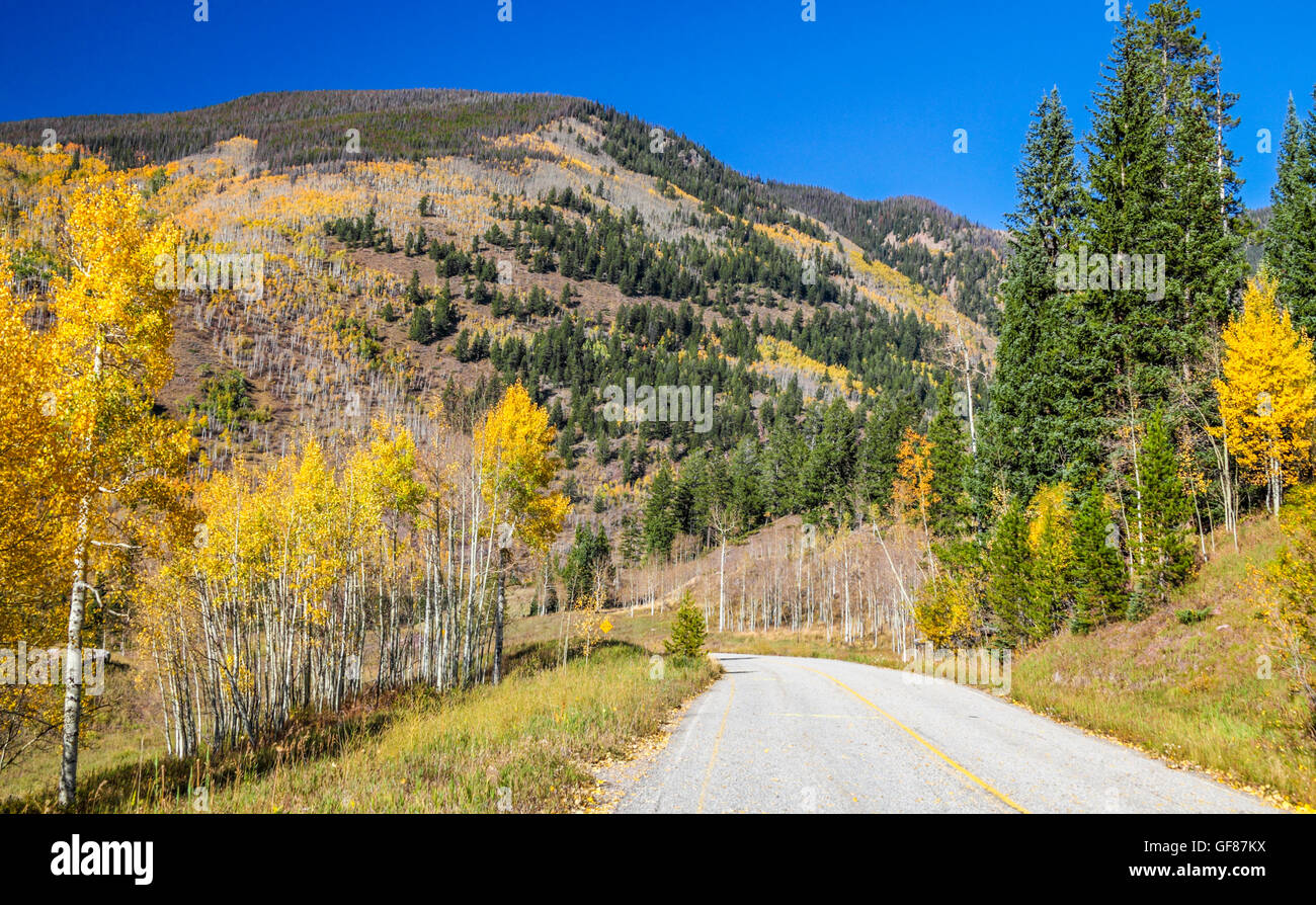 Colorful leaves along old Vail Pass, enjoyed by hikers and mountain bikers - Stock Image