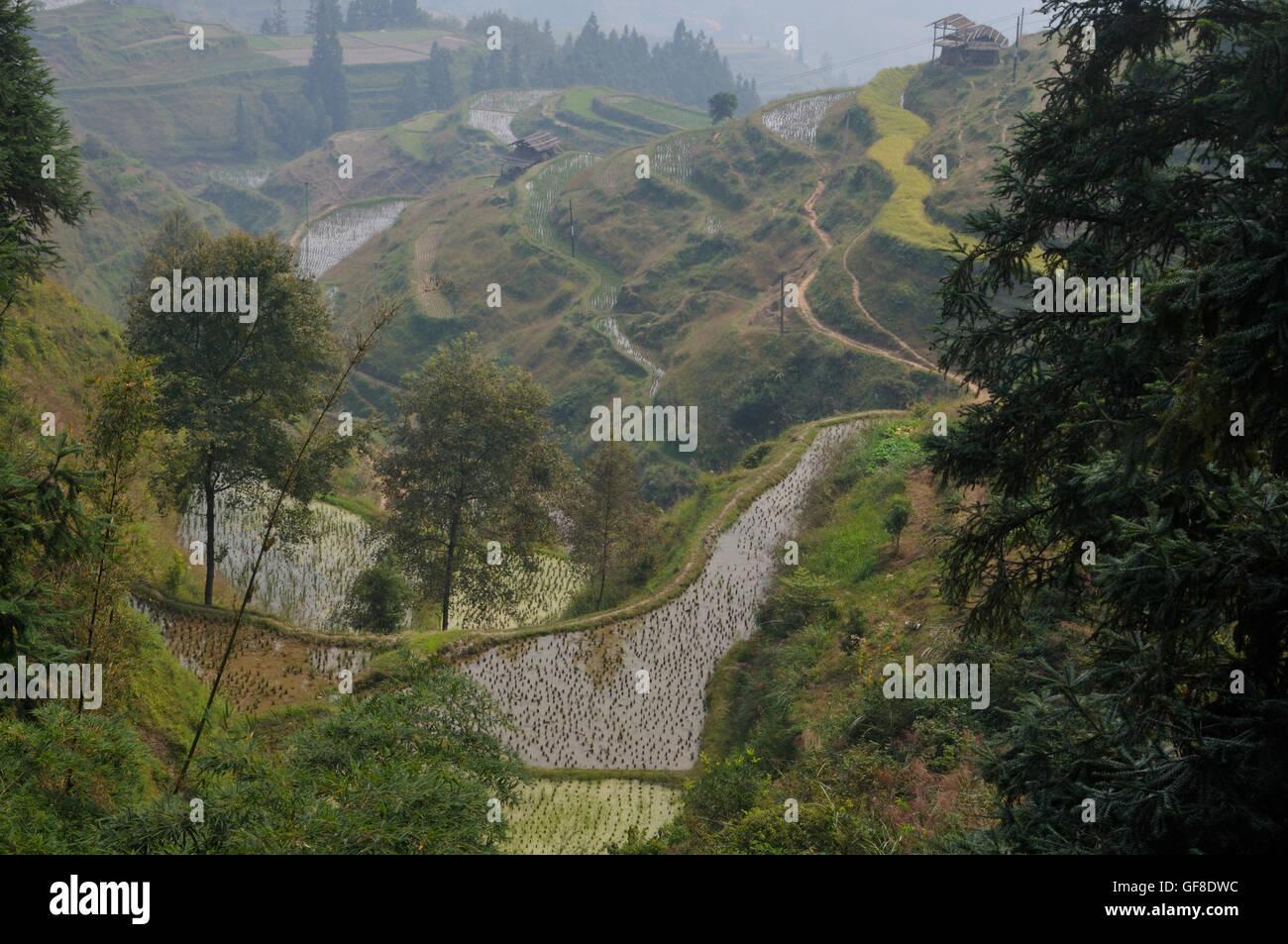 Rice Terraces in Jiting, Guizhou, China Stock Photo