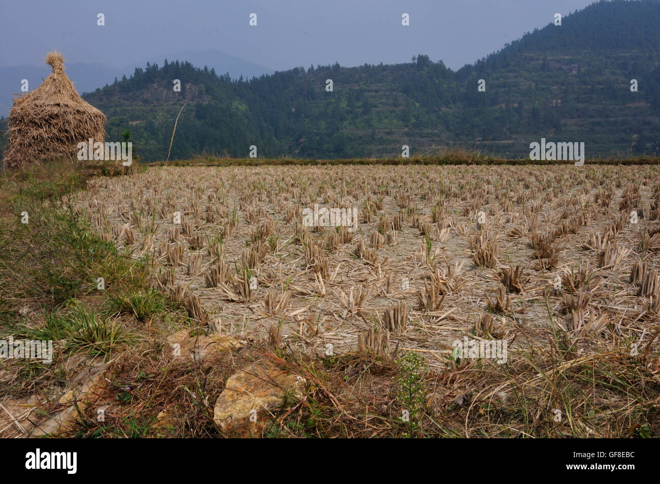 Harvested Rice Field in the Terraces Above Jitang, Guizhou, China Stock Photo