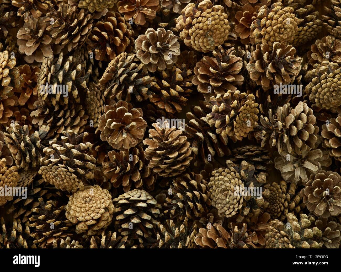 Pine cones, full frame. - Stock Image