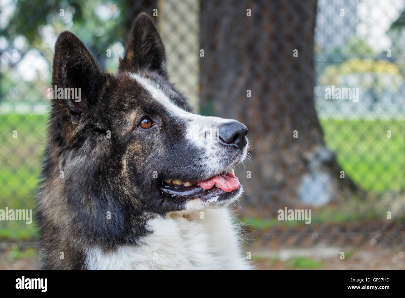 Image of a large dog - Stock Image