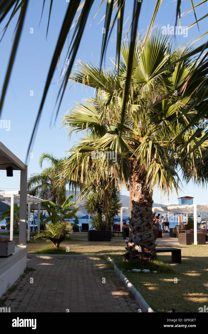 Bar at Antisamos beach, Island of Kefalonia in the Ionian sea, Greece - Stock Image